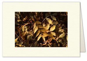 PhotoArt Card H034