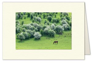 PhotoArt Card H057