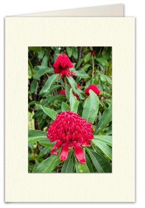 PhotoArt Card V029