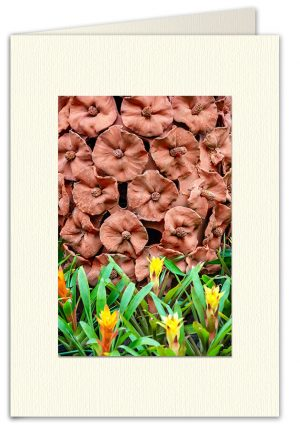 PhotoArt Card V031